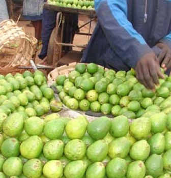 La goyave un fruit au grand potentiel