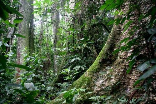 Secteur forêt/environnement SAILD