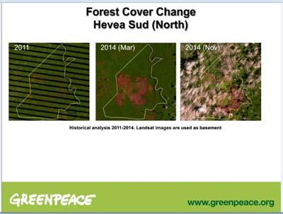 Des entreprises d'agroalimentaire détruisent les forêts tropicales et les habitats de chimpanzés et d'autres grands singes
