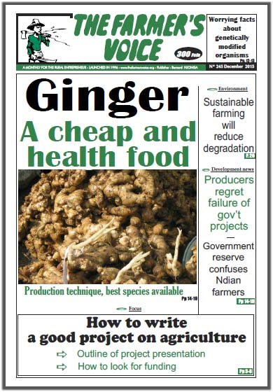 Ginger, A cheap and health food